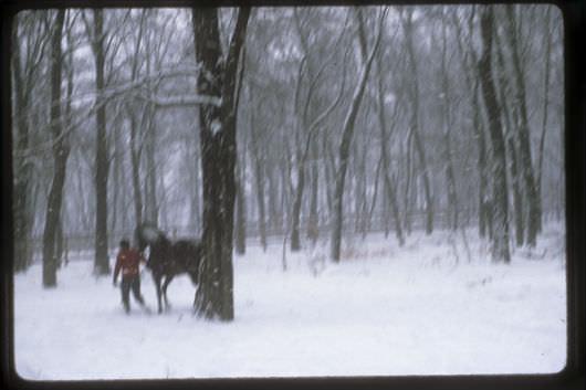 Sylvia_horse_hirkep