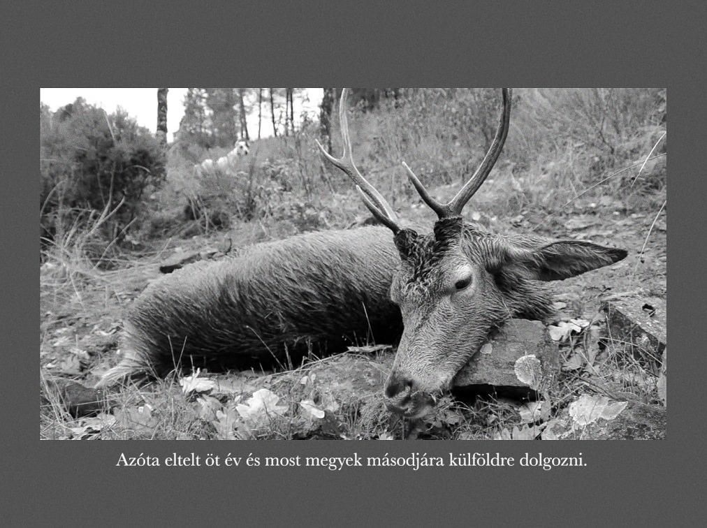Ofner Gergely: Egy vadászat, 2019 © Ofner Gergely
