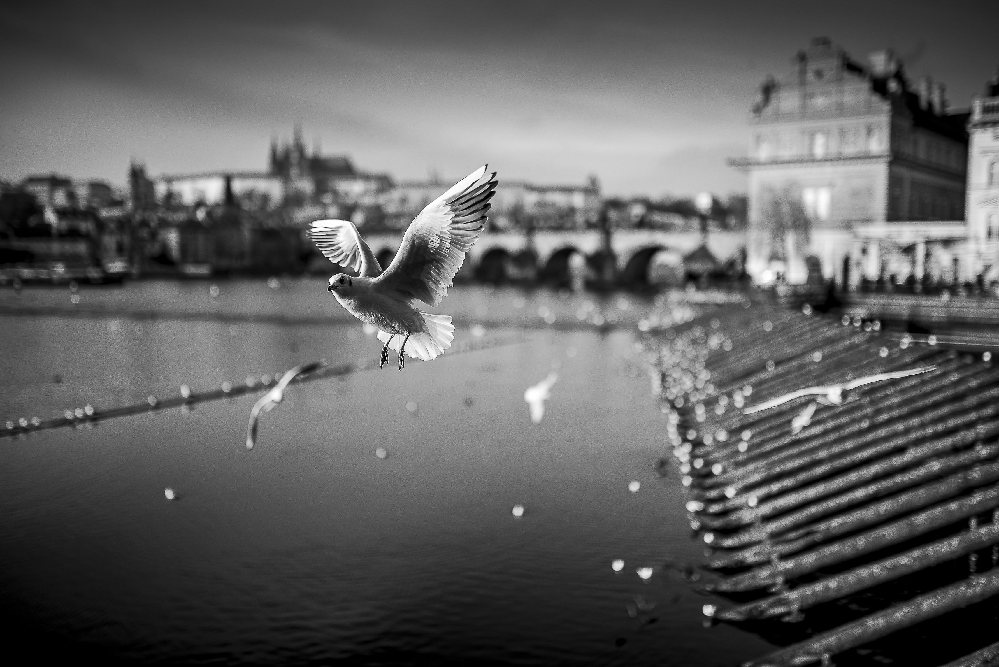Bielik István: Csehország, Prága, 2016 © Bielik István