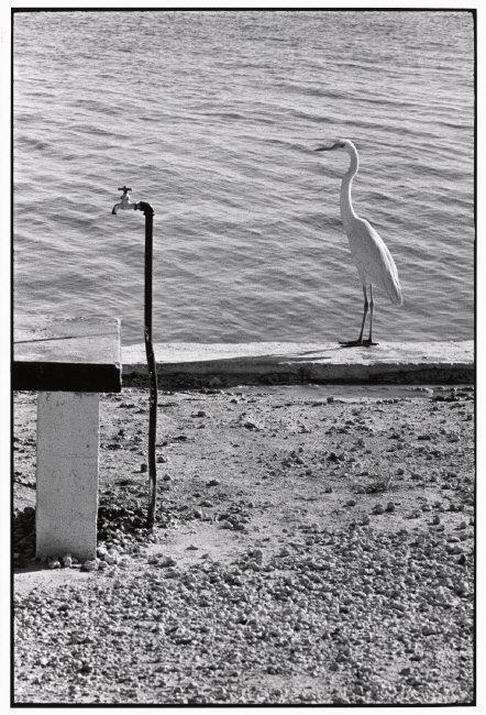 Florida Keys, USA, 1968 © Elliott Erwitt / Magnum Photos