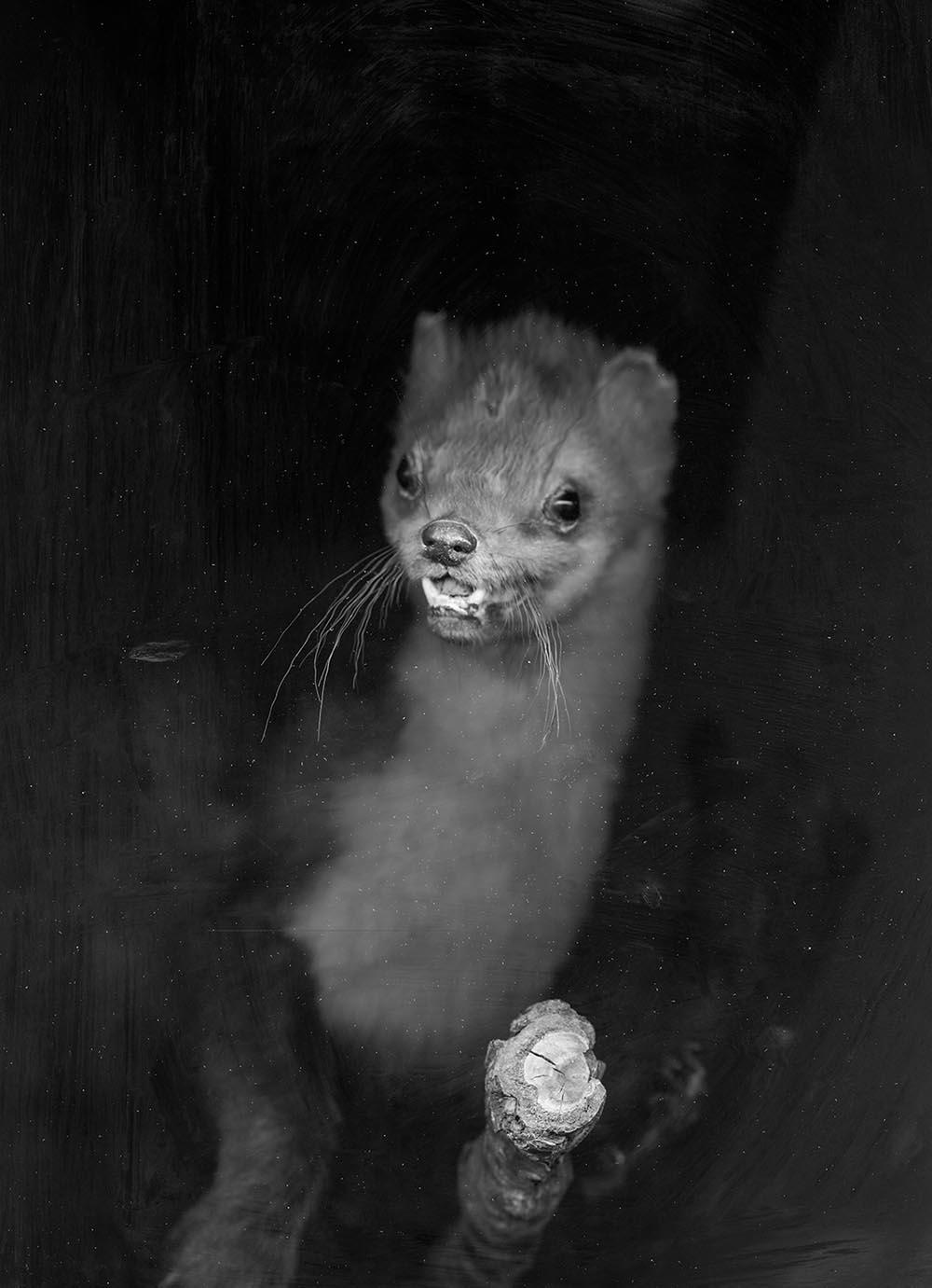 Hodosy Enikő: Animalia variabilis, 2016 © Hodosy Enikő