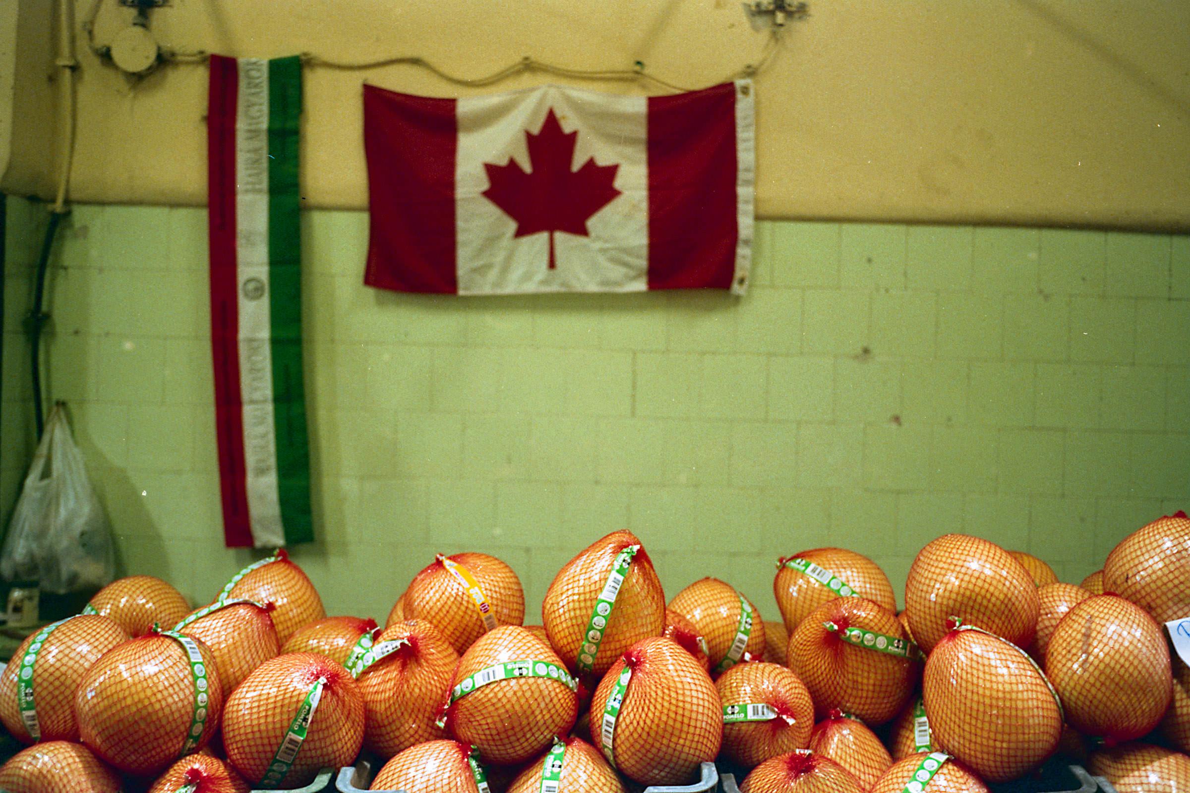 Magócsi Márton: Budapest, kanadai pomeló | Budapest, Canadian Pomelo, 2016