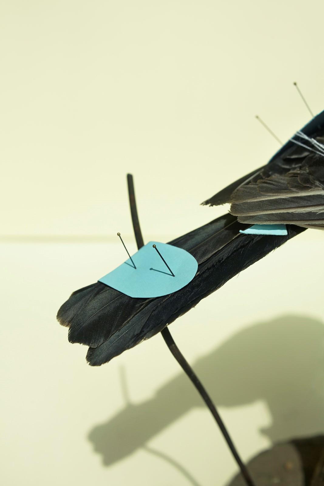 Taxidermi detail nr.1 2014., Részlet a Bird, Bald, Book, Bubble, Bucket, Brick, Potato sorozatból, 28x42cm