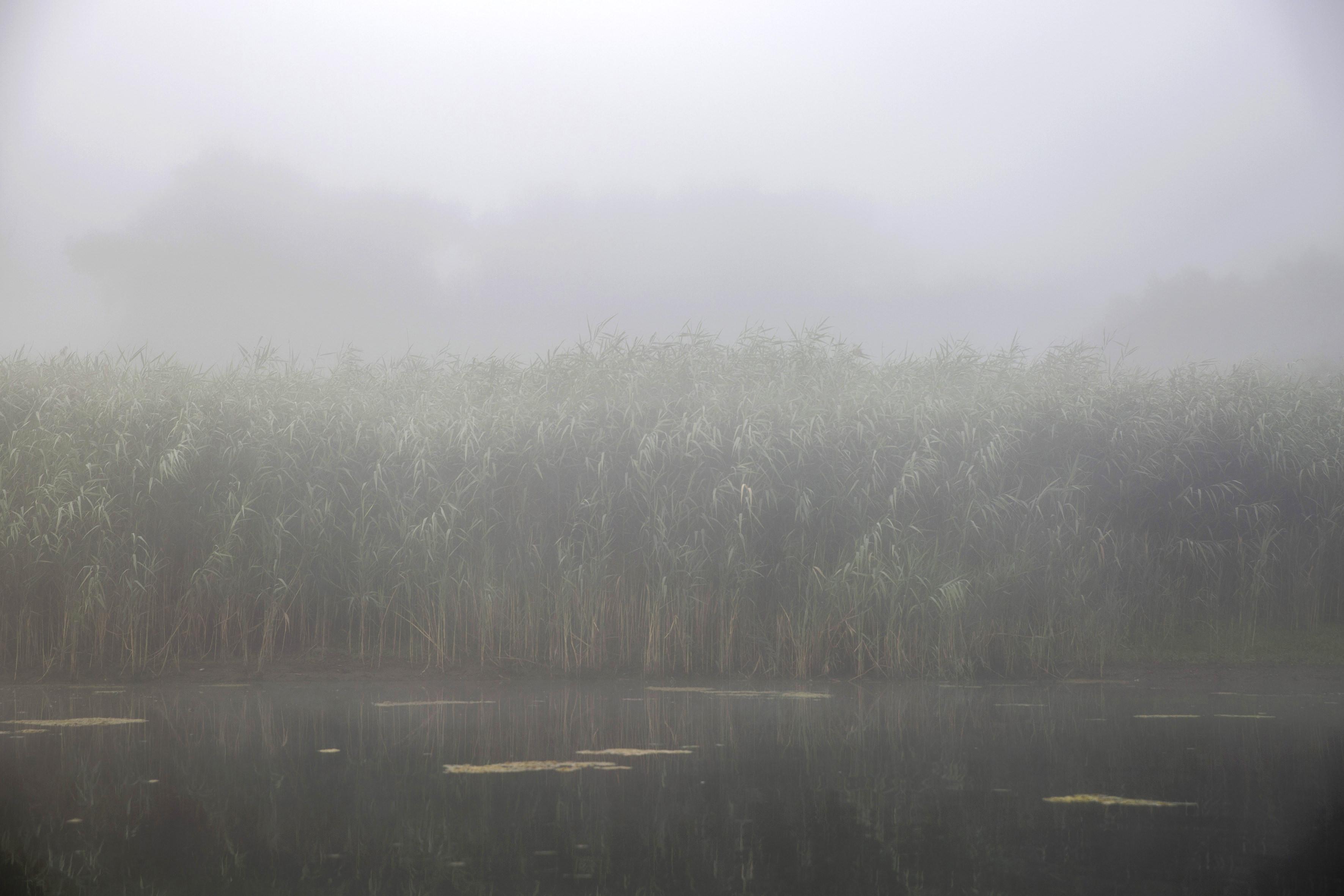 Végh László: Duna-delta (részlet a sorozatból)