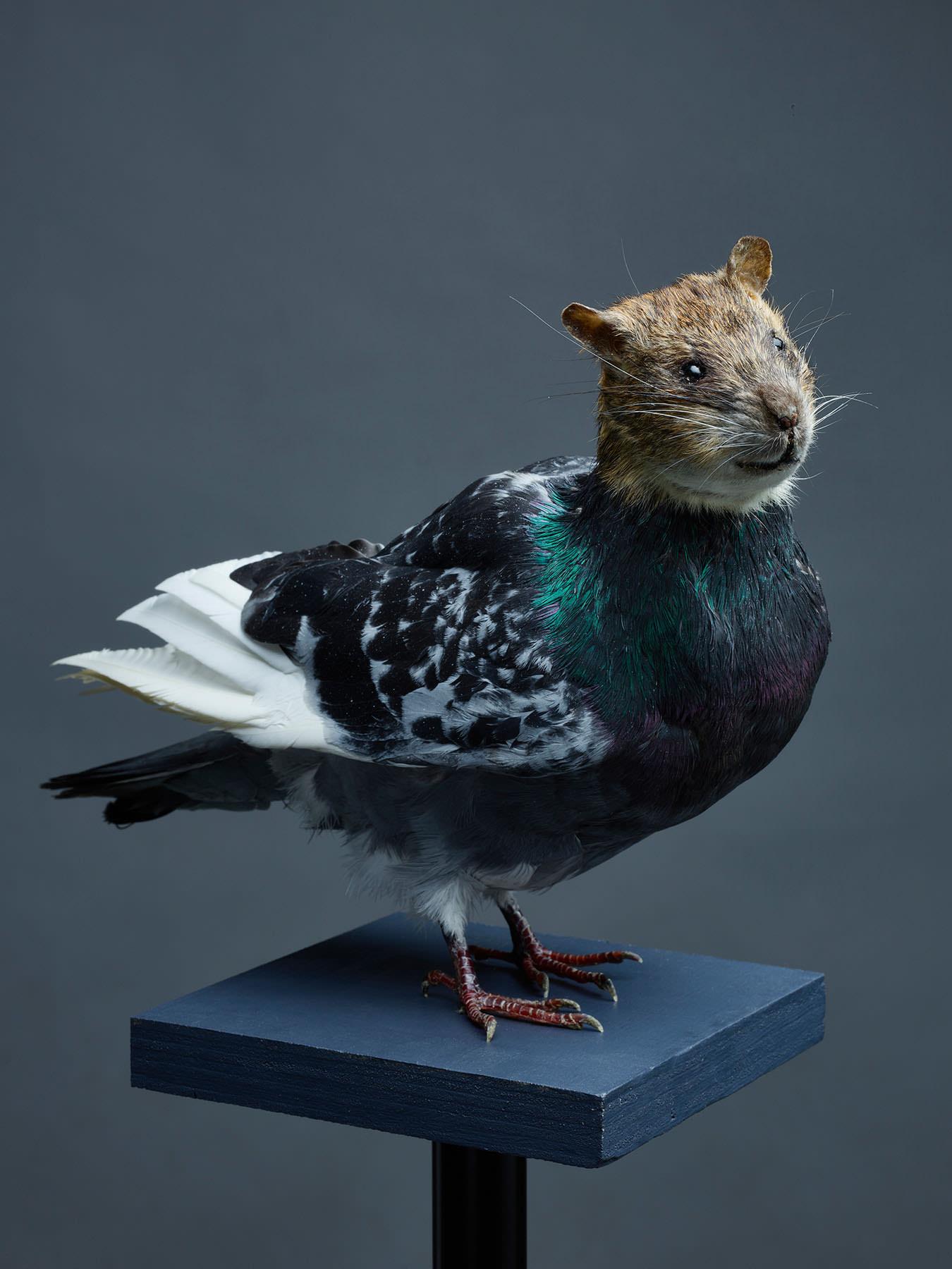 SZALAI Dániel: Untitled (Rat with wings) (from the project Stadtluft) / Cím nélkül (Szárnyas patkány) (A Stadtluft projektből) 2019