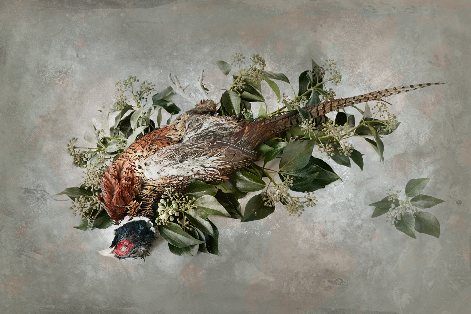 Peter M. Madsen: Pheasant memento mori © Peter M. Madsen