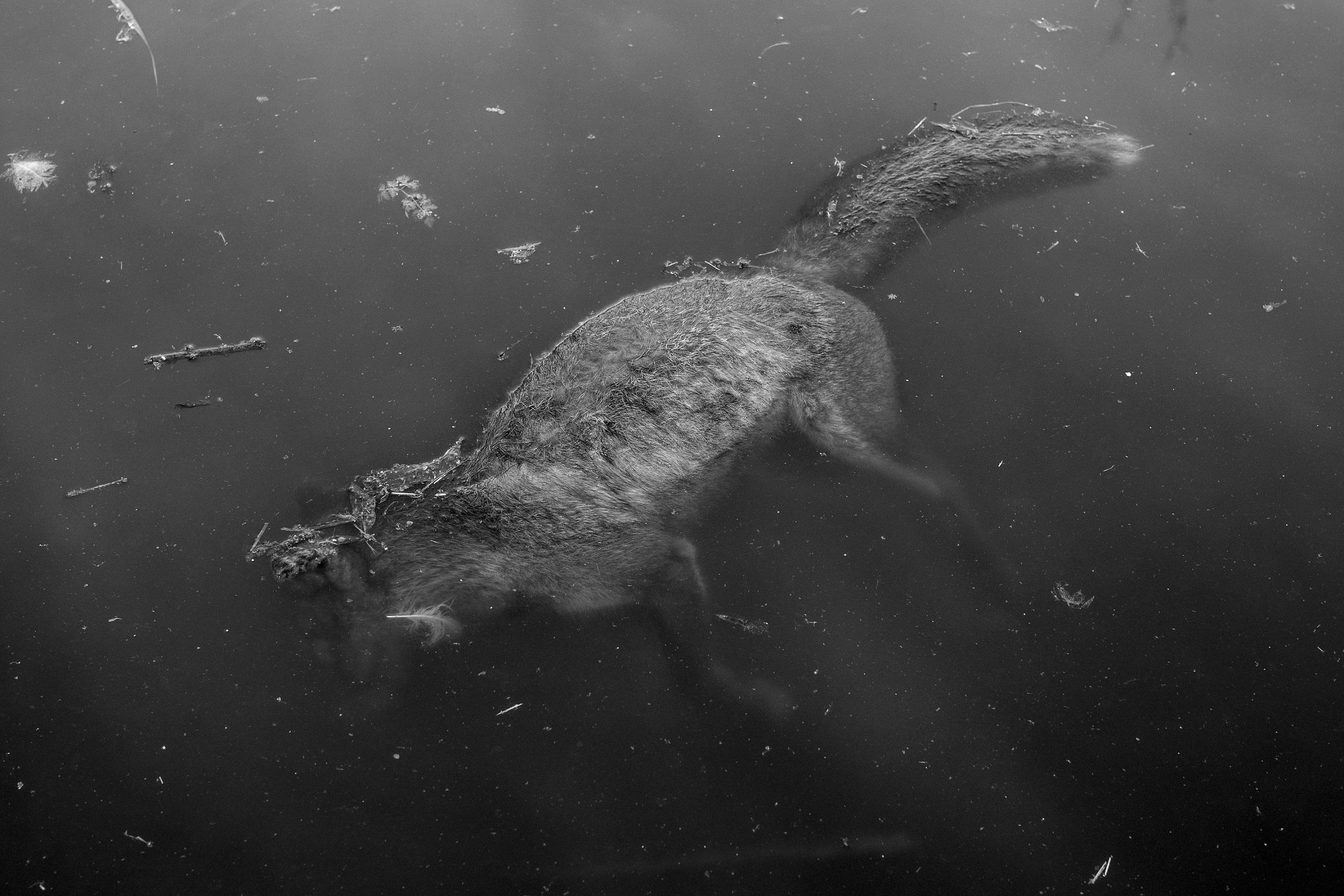 Martin Eberlein: Részlet az Ahol én élek, ott nincsenek jegesmedvék   From the series There Are No Polar Bears Where I Live, 2019